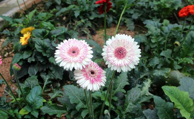 Quelles fleurs planter dans le jardin ?